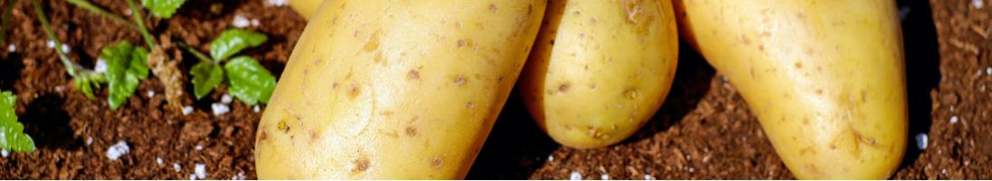 Macchine Professionali per PELATURA Alimenti come Cozze e Patate