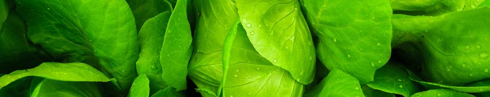Asciuga Verdure Industriali | Asciuga Verdure Elettriche